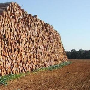 Продажа леса (кругляк) хвойных и других пород